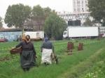 Saint-Denis, maraîcher, ouvrières agricoles, ex-Yougoslavie